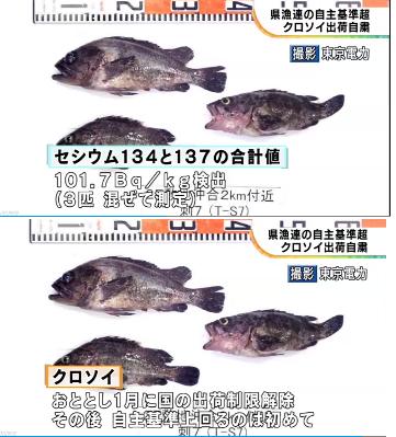 NHK,2019/6/4